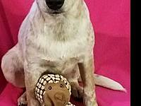 Amelia ( $150 Adptn fee)'s story Please contact Jim at