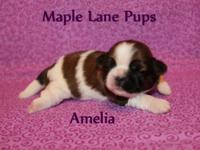 Amelia is a little princes! She is a beautiful Red &