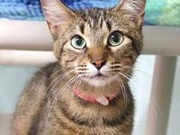 Amelia's story Amelia is a sweet young gal looking for