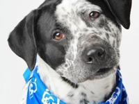 Amelia is a 1yr young Pointer mix that is easy-going