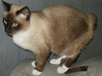 **PRICE REDUCED TO $100** American Bobtail cat seal