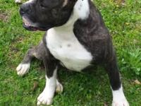 I have a one year old male American bulldog he is black