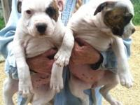 Three big bundles of joy looking for families to love.