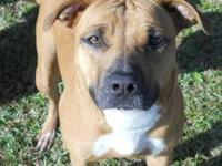 American Bulldog - Annie - Medium - Adult - Female -