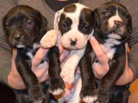 I have 4 males & 1 female puppies. The female is the