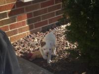 Description I have four puppies available. Beautiful,