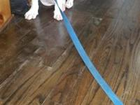 9 weeks old sweet loving temperment, loves my kids and