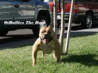 Ot bulliez the rock is two years old. His out of ot