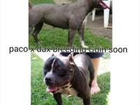 Paco x Dax pups on da ground 3 girls 6 boys taking