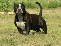I have a 1yr old male available. housebroken & good in