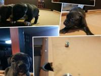 I have 4 American bully pups available. 3 boys and 1