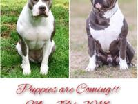 Dont miss out! This breeding will produce beautiful