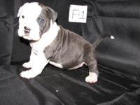 ukc purple ribbon reproduced young puppies / existing