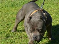 Lil Herc x Harmony have 5 choices readily available,