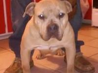 AMERICAN bully pups I have 1male 1 female available to