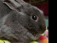American - Emmy Lou - Medium - Adult - Female - Rabbit