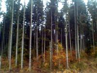Timber Wanted in Western Washington counties, from,