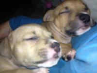I have 2 puppies left from a litter of 12. They are
