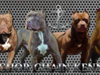 At Anchor Chain Kennels we are devoted to breeding only