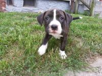 I have 1 female for sale and needs a new home Asap. She