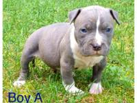 4 males 3 females 4 week old puppys for sale. The sire