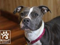American Staffordshire Terrier - Mona Miah - Large -
