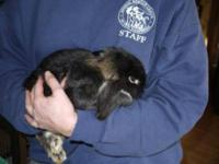 American - Texas - Small - Young - Female - Rabbit Hi