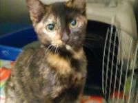 Amethyst is new to our rescue!  She is sweet and