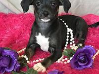 Amethyst Jewels litter's story Amethyst is a sweet