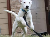 Amira's story I am a 4 month old white Terrier mix. I