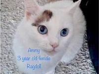 Ammy's story C1808027 - Ammy is a beautiful, 3 year old
