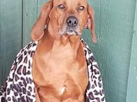 Amora's story Amora is a very loving sweet hound who