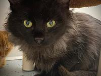 My story Amore and her siblings were found abandoned in