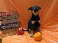 Amy's story I'm a blue heeler mix, full of fun and