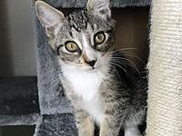 Amy's story Amy is the friendliest kitten! She is very