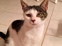 Anabelle's story A beautiful mamma cat saved from an