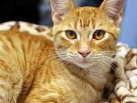 Anaranjado's story Primary Color: Orange Tabby Weight: