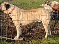 New price for non breeding papers 750 for breeding