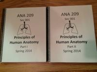 ANA 209, Anatomy for majors lecture slides. Bought from