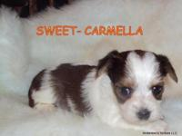 """Carmella"" is as beautiful as her name !!!!! She is so"