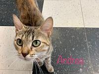 My story Andrea was found as a stray with some babies.