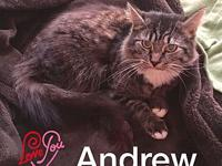 Andrew's story ** Contact info: email