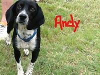 "ANDY's story ""ANDY"" - the perfect small dog -"