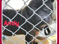 ANDY  Andy would just love to have a forever home and