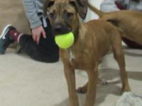 Introducting Andy!  Andy is about 16-18 weeks old and