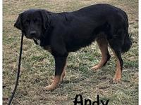 My story Andy is a handsome and very sweet natured  1