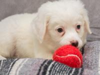 Angel is a puppy from a litter of 4 that were born to a