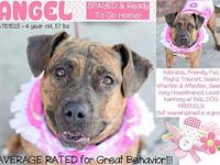 Angel's story Angel is a sweet girl saved from Death