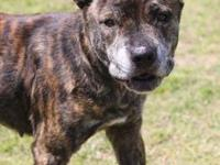 "Angel's story Looking for a big brindle bundle of ""I"