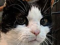 Angel's story I'm a sweet kitty. Due to family illness,